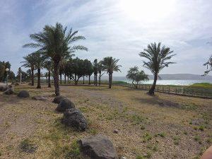 חוף רותם שיזף