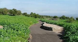 כפר נחום- גשר אריק- שביל סובב כינרת