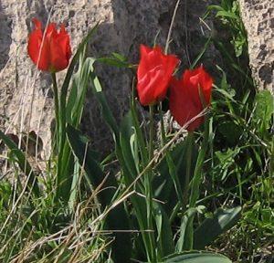 צבעוני אדום בנחל השומר | צילום: יעל סלע