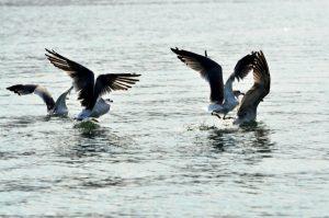 עופות נודדים, צילום: אבי אריש