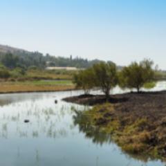 שיקום אקולוגי שמורת טבע אחו גונן